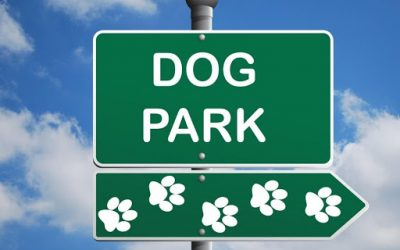 Dog Parks: Pros and Cons (What You Need to Know)