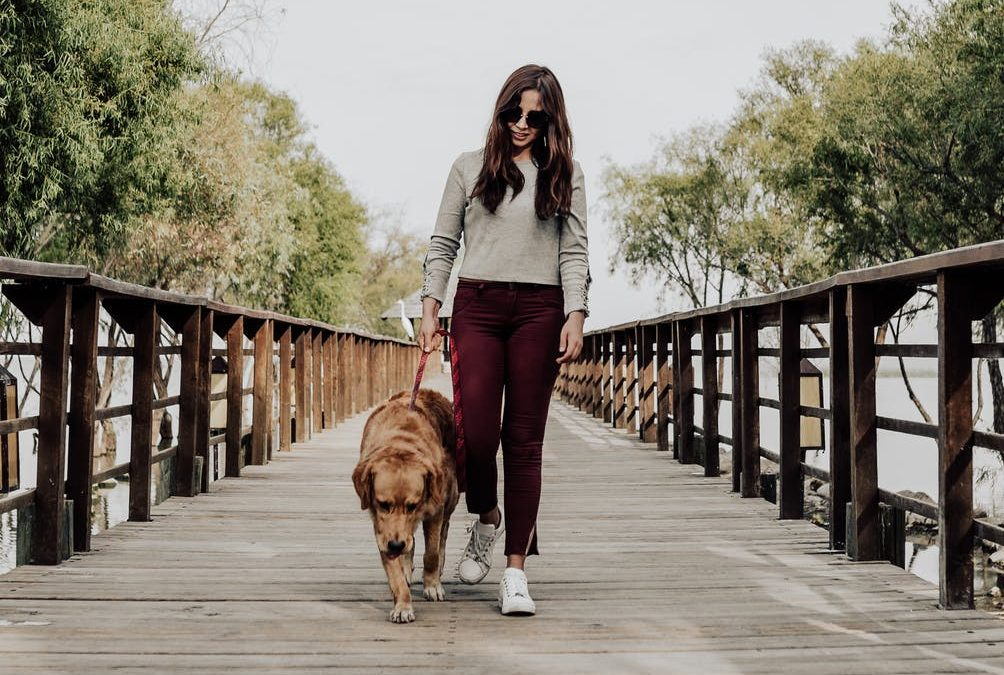 Health Benefits of Daily Dog Walks