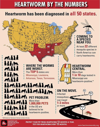 Heartworm by the numbers infographic