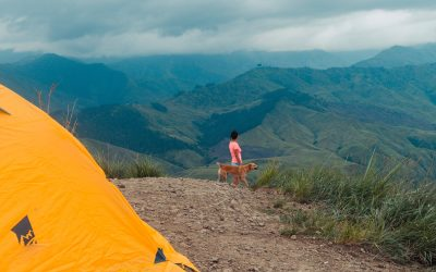 4 Tips for Camping Safely with your Dog