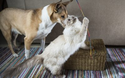 Easy DIY Dog and Cat Toys