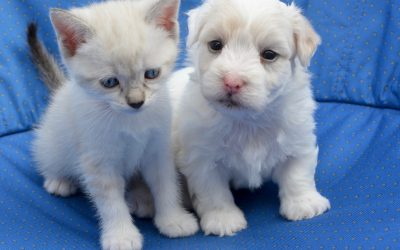 Pet Adoption 101: Tips for Raising a Kitten or Puppy