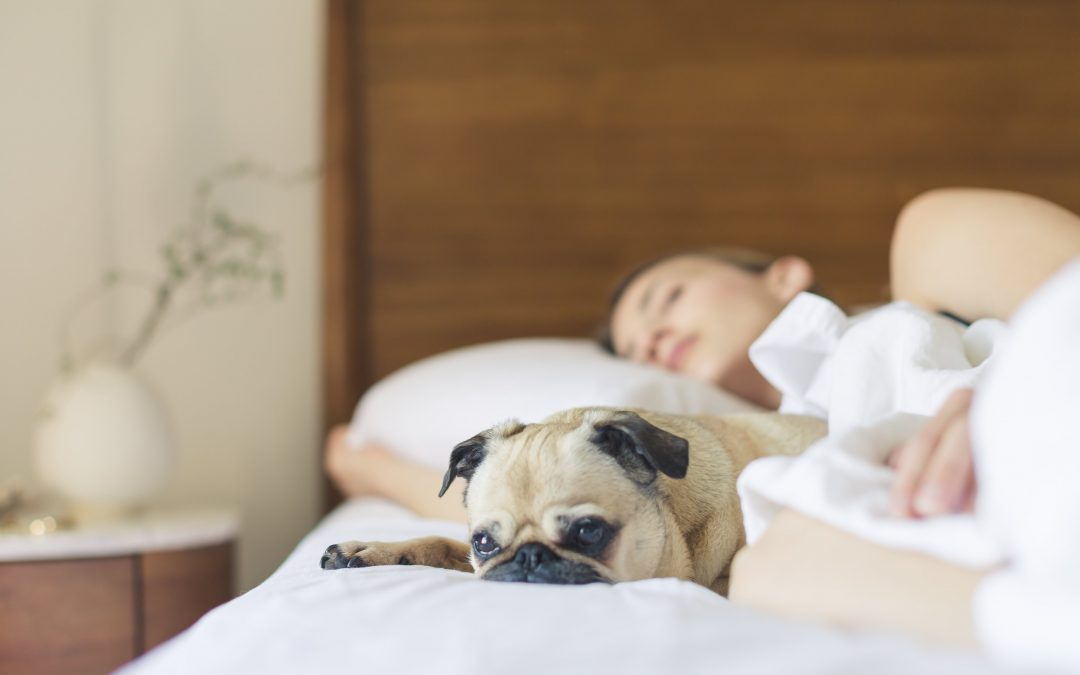 What to Know About Smoke and Pets